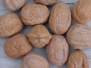 Kondom v ořechu